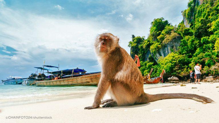 monkey-beach tour